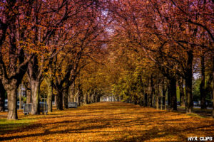 landscape-photography-nyxclips-12